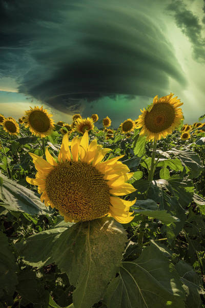 Wall Art - Photograph - Disarray  by Aaron J Groen