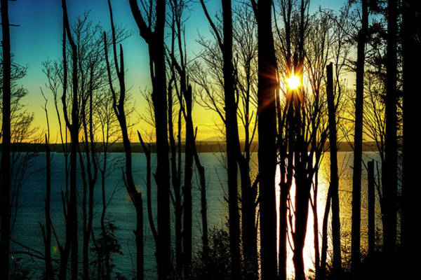Wall Art - Photograph - Discovery Park Trees Sunset by Pelo Blanco Photo
