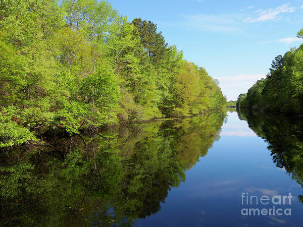 Wall Art - Photograph - Dismal Swamp Canal In Spring by Louise Heusinkveld