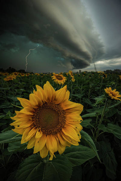Wall Art - Photograph - Disorder by Aaron J Groen