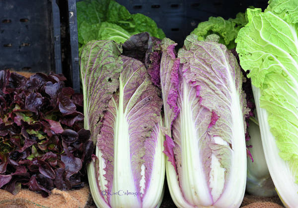 Photograph - Display Of Lettuces by Kae Cheatham