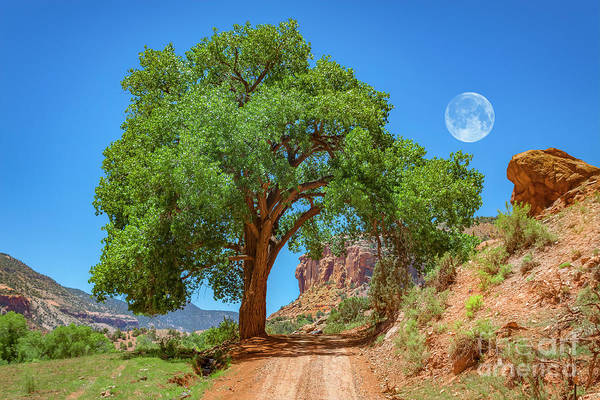 Wall Art - Photograph - Distant Escalante Moon by Janice Pariza