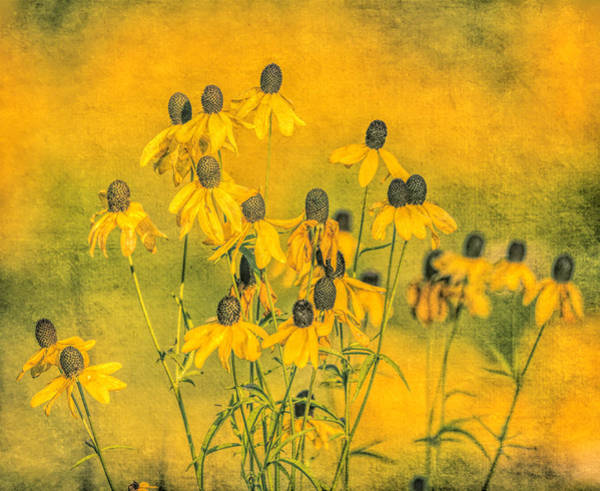 Photograph - Distressed Yellow Wildflowers by Dan Sproul