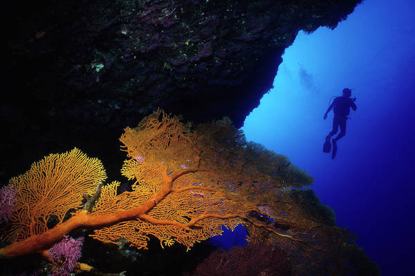 Underwater Photograph - Diver And Orange Sea Fan by Tammy616
