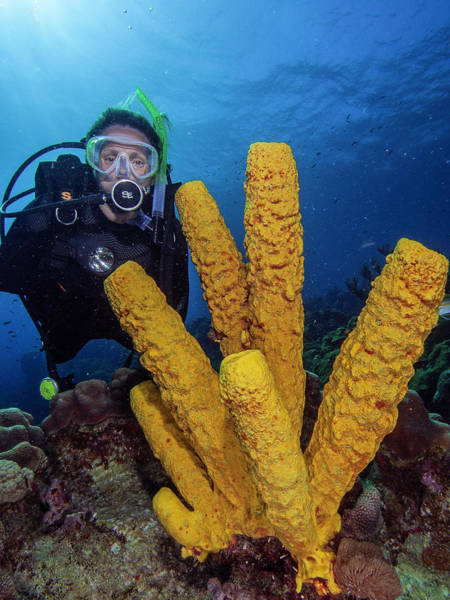Photograph - Diver And Yellow Tube Sponge by Organizacion Bluewater