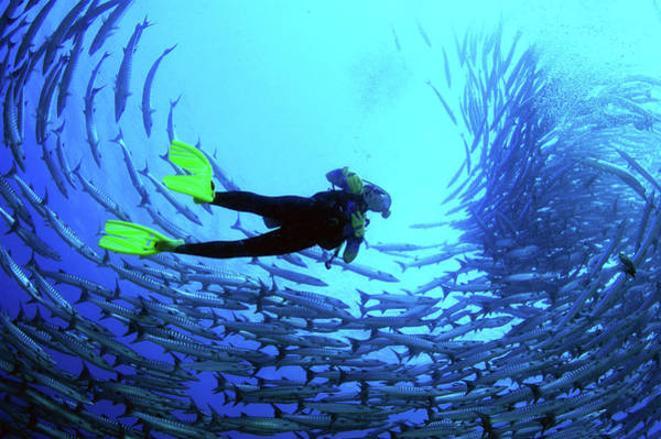 Snorkeling Photograph - Diver In The Middle Of A School Of Fish by Tim Rock