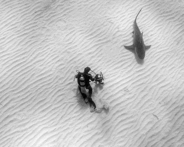 Photograph - Diver Photographing A Lemon Shark by Brent Barnes