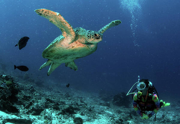 Snorkel Photograph - Diver Watching A Turtle Swimming In The by Tim Rock