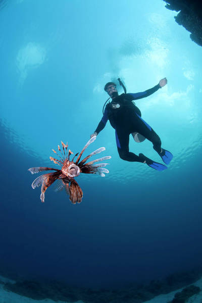 Eleuthera Island Photograph - Diver With Lionfish At Ikes Reef Dive by Michael Lawrence