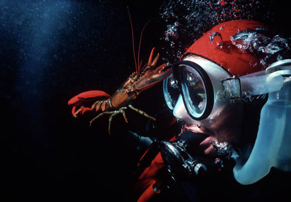 Underwater Photograph - Diver With Young American Lobster by Jeff Rotman