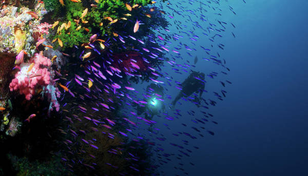 Underwater Camera Photograph - Divers Along Reef by Apsimo1