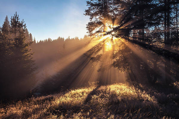 Photograph - Divine Beams by Evgeni Dinev
