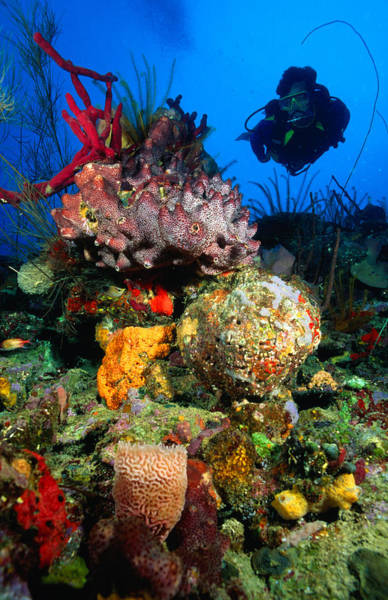 Scuba Diving Photograph - Diving In Colourful Reef, South Of by Michael Lawrence