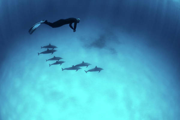 Underwater Diving Photograph - Diving With The Dolphins by Extreme-photographer