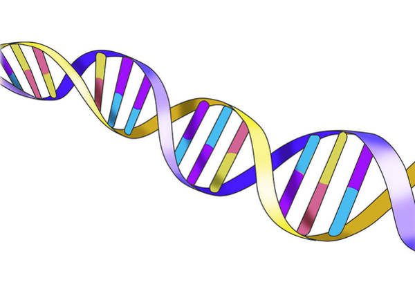 Wall Art - Photograph - Dna, Double Helix, Illustration by Monica Schroeder