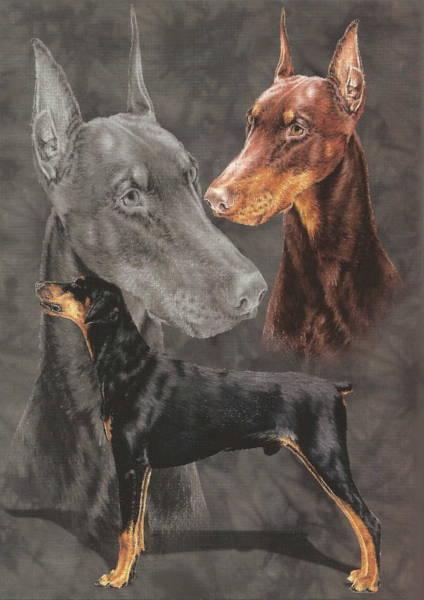 Drawing - Doberman Alteration by Barbara Keith