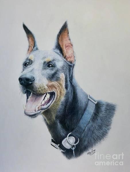 Drawing - Doberman by Mike Ivey