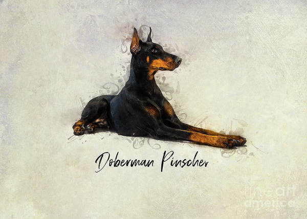 Digital Art - Doberman Pinscher by Ian Mitchell
