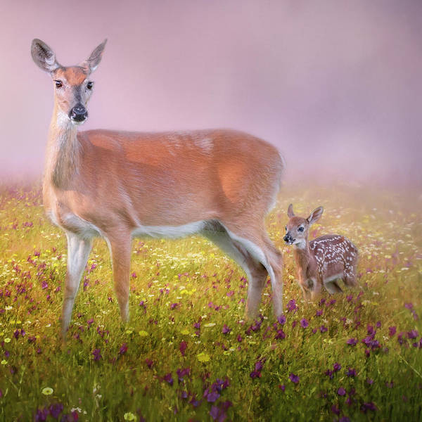 Photograph - Doe And Fawn Square by Bill Wakeley