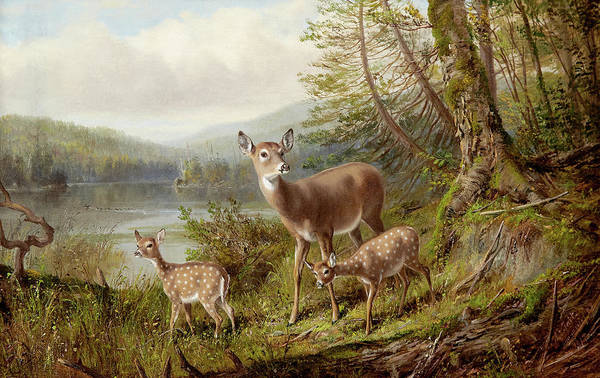 Wall Art - Painting - Doe And Fawns by Arthur Fitzwilliam Tait