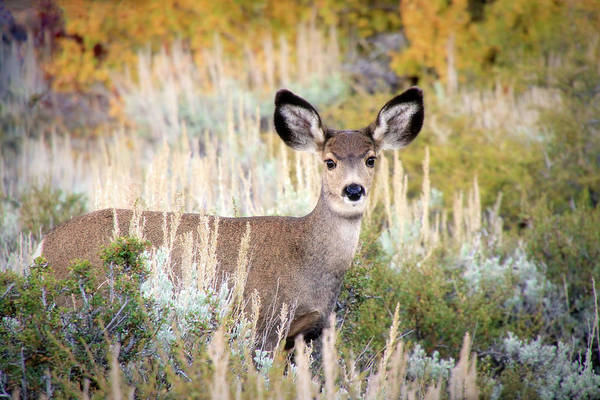 Wall Art - Photograph - Doe Eyes by Donna Kennedy