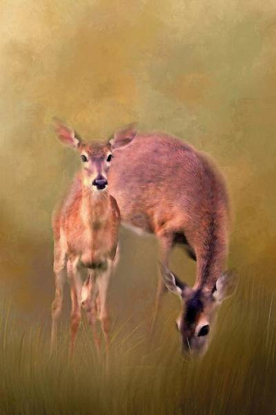 Wall Art - Photograph - Doe Mom And Offspring by HH Photography of Florida