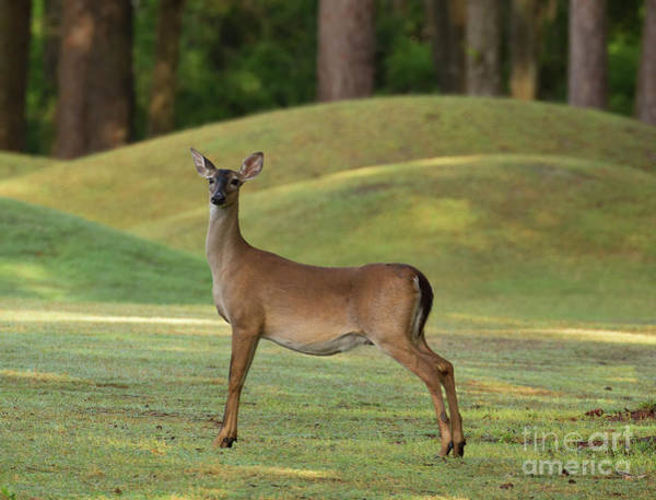 Wall Art - Photograph - Does Anybody Know Where My Golf Ball Went? by Michelle Tinger