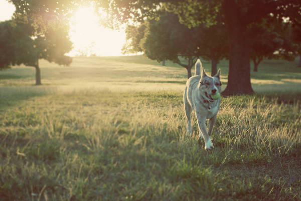 Playful Photograph - Dog Against Sunlight by Olive Juice Photography