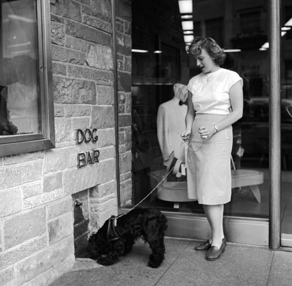 White Dog Photograph - Dog Bar by Evans