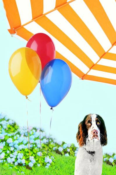 Wall Art - Photograph - Dog Days Of Summer by Diana Angstadt