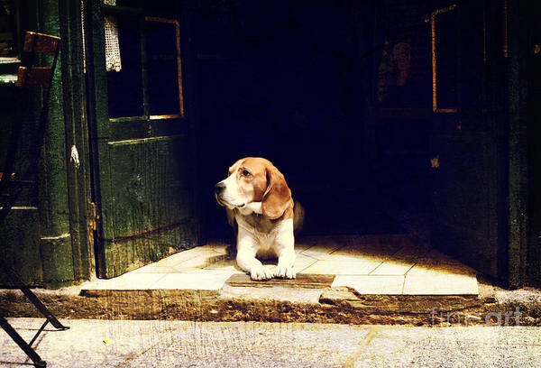 Wall Art - Photograph - Dog Guarding The Entrance To The House by Okcamera