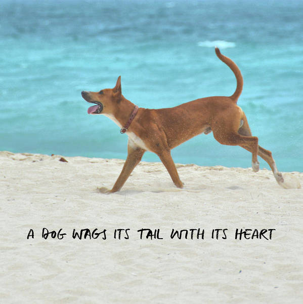 Photograph - Dog Heart Quote by Jamart Photography