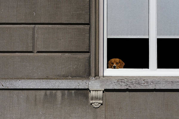 Photograph - Dog In The Window by Thomas Hall