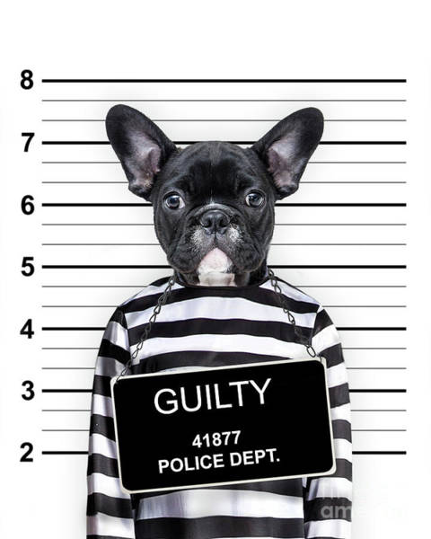 Mugshot Wall Art - Photograph - Dog Mug Shot by Delphimages Photo Creations