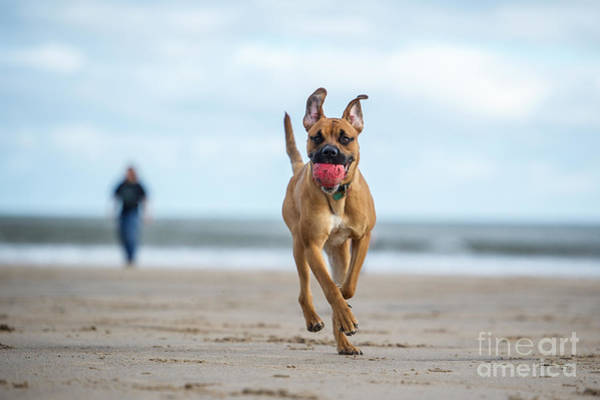 Wall Art - Photograph - Dog On The Beach by Rebeccaashworth