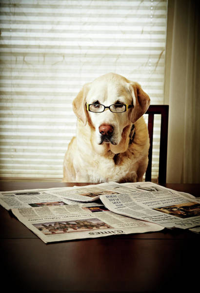 Newspaper Photograph - Dog Reading The Newspaper And Wearing by Tony Garcia