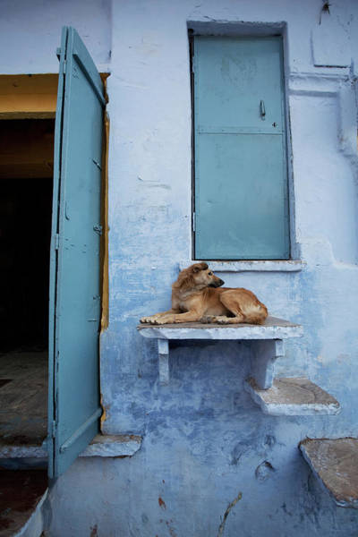 Wall Art - Photograph - Dog Resting On Step Leading To Doorway by April Maciborka