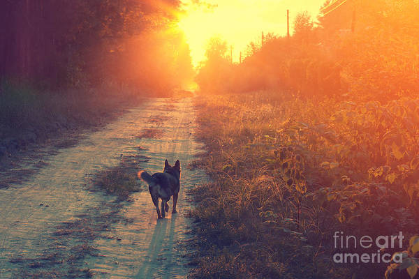 Wall Art - Photograph - Dog Running In The Countryside by Vvvita