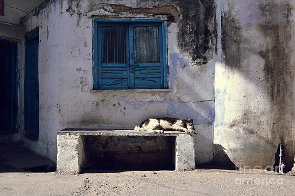 Dog Sleeps On A Bench Outdoor In Art Print