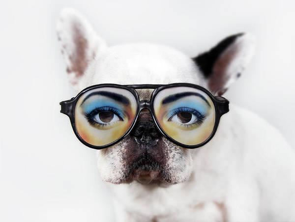 French Bulldog Photograph - Dog Wear Glasses by Retales Botijero