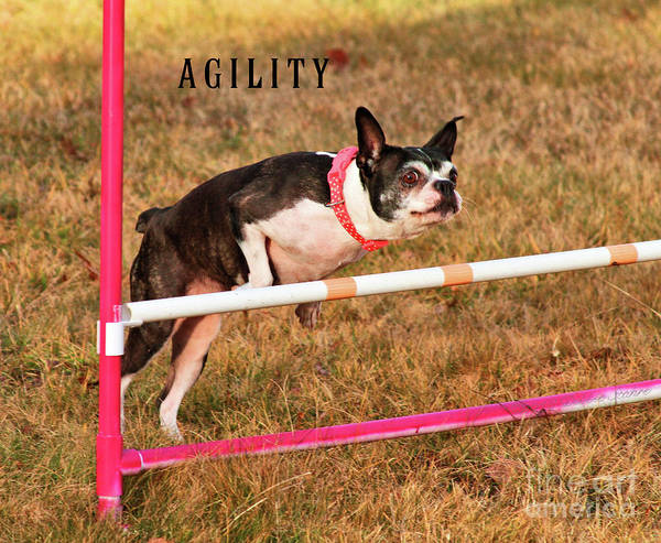 Photograph - Doggie Agility  by Debbie Stahre