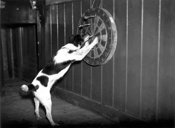Pulling Photograph - Doggy Darts by N Smith