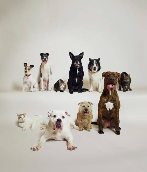 Variation Photograph - Dogs And Cats Group Shot by Dan Burn-forti