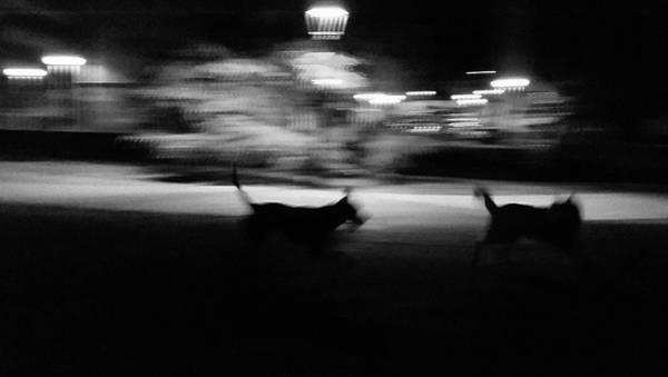 Wall Art - Photograph - Dogs Chase by Rafa Rivas