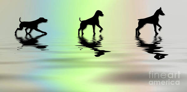 Wall Art - Photograph - Dogs  by Elaine Manley