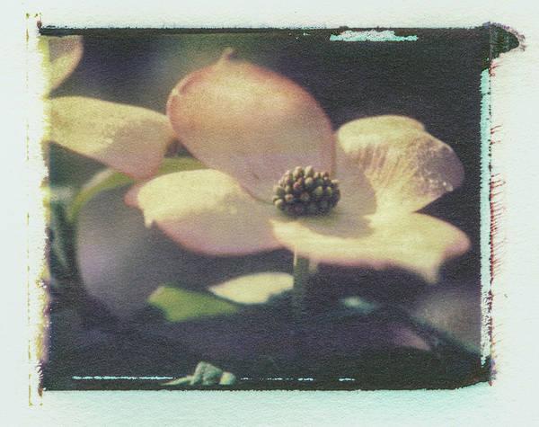 Photograph - Dogwood 1 by Joye Ardyn Durham