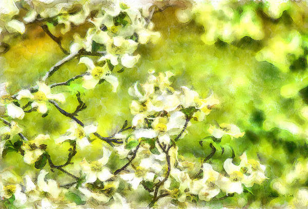 Photograph - Dogwood Springtime by Bellesouth Studio