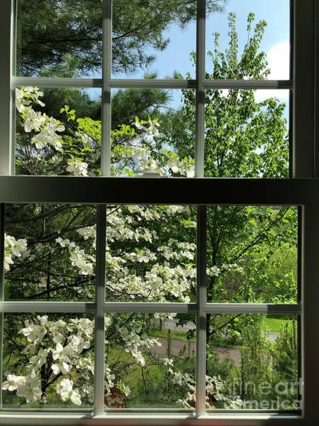 Wall Art - Photograph - Dogwood View by John Stephens