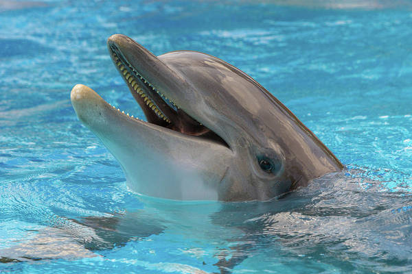 Photograph - Dolphin In Pool by SR Green