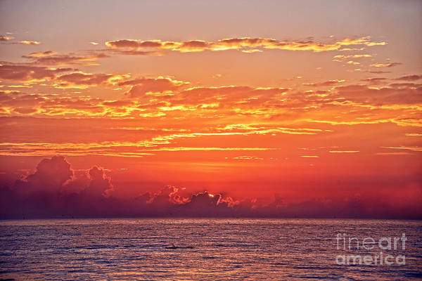 Wall Art - Photograph - Dolphin Leaping At Sunrise by Catherine Sherman